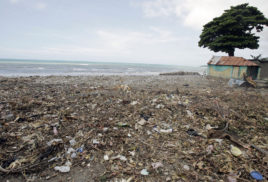 Protecting mangroves from plastic pollution in Haiti