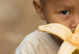 Forests: an overlooked resource for tackling micronutrient deficiency
