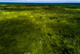 New center begins 'corrective era' for peatlands