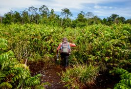 Improve peatland management to protect climate, say GLF delegates