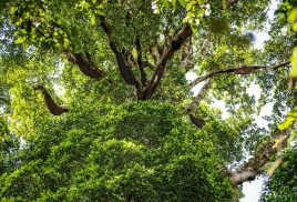 Share your view on the future of forests and forestry