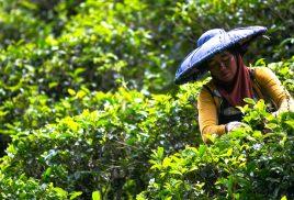 Landscape restoration expensive, exhausting – essential