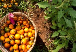 Preventing future pandemics could depend on sustainable food